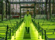 alge airbus